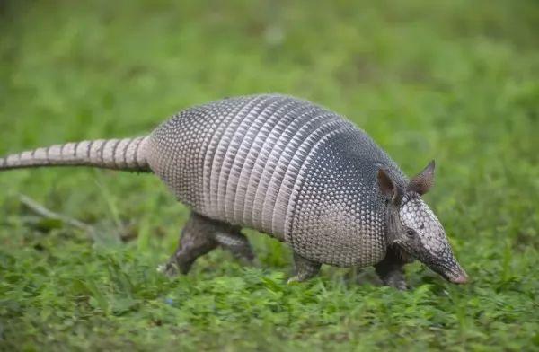 11 من حيوانات أمريكا الشمالية الرائعة