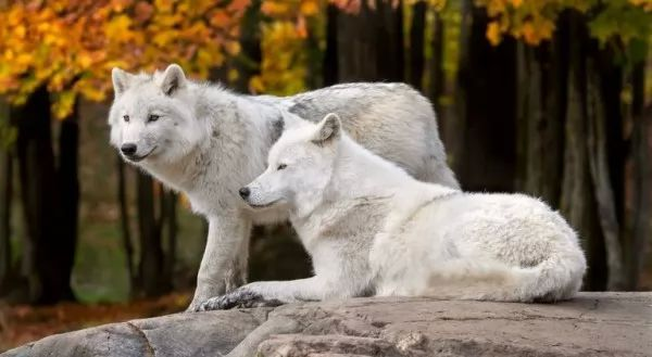 صور - 11 من حيوانات امريكا الشمالية الرائعة