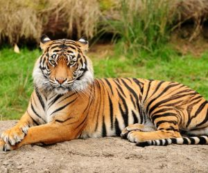 الحيوانات أو (الميتازوا) هي مجموعة من الكائنات الحية التي تضم أكثر من مليون نوع معين، وهناك اكثر من عدة ملايين التي لم يتم تسميتها بعد، ويقدر العلماء ...