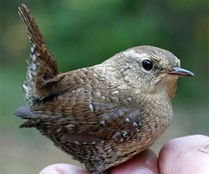 في هذا المقال قائمة من ابرز عشرة من الطيور المنقرضة في العصور التاريخية في ترتيب تنازلي من الاختفاء.