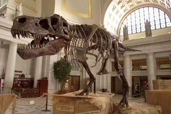 صور - هل يمكن استنساخ الديناصورات؟