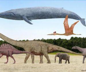 حجم حيوانات ما قبل التاريخ يمكن من الصعب ان ندركه، حيث أن حيوانات ما قبل التاريخ يمكن ان تصل الى وزن 50 طن، و50 قدم في الطول، فأنت تتحدث عن مخلوقات ...