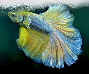 ذاكرة السمك قد حيرت العلماء، فالعلماء يعتقدون ان الاسماك قد يكون لها اعماق خفية، فالمخلوقات مجرد ان يكون لهم ذاكرة تصل الى ثلاث ثواني يمكن ان يتذكرو ...