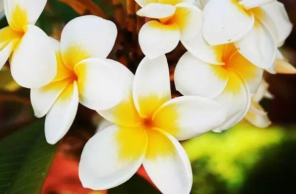 صور - 6 من اهم اسماء الزهور ومعانيها