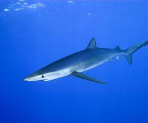 هناك أكثر من 450 نوع من سمك القرش الموجود في العالم اليوم، وتأتي الآلاف من أنواع سمك القرش وتذهب على مدى ملايين السنين، وسوف نتعرف في هذه   المقالة ...