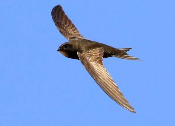ماذا تعرف عن طائر السمامة ؟ 9473_3_or_1493064703