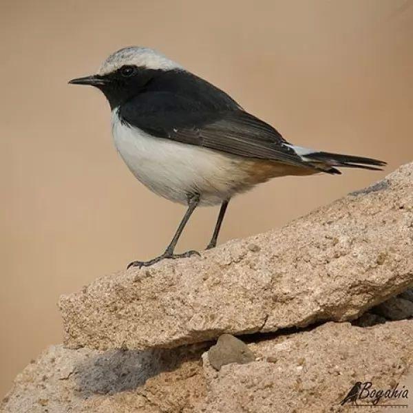 هجرة الطيور 9474_3_or_1493075154