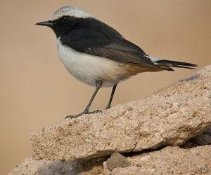 لعشاق الطيور، سوف نذكر لكم بعض الحقائق المذهلة والمثيرة للاهتمام عن هجرة الطيور، فهناك الكثير من المتعة عندما تراقب هجرة الطيور من مكان الى   مكان، ...