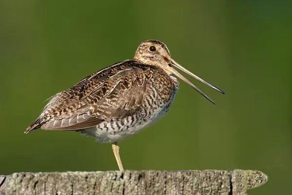 صور - 9 حقائق مذهلة عن هجرة الطيور