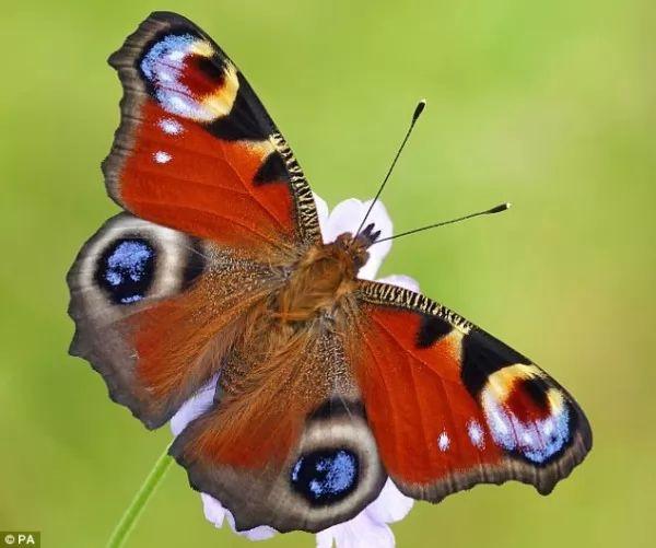 معلومات عن الفراشات اجمل الحشرات