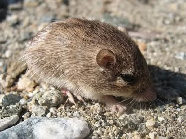صور - كيف تكيفت حيوانات الصحراء للبقاء على قيد الحياة ؟