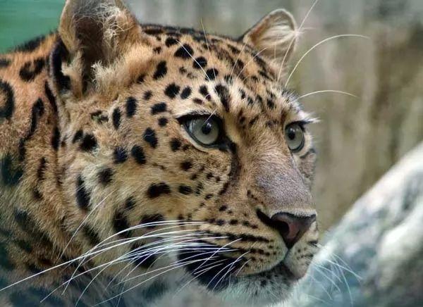 صور - ما هي اهم الحيوانات المهددة بالانقراض في العالم ؟