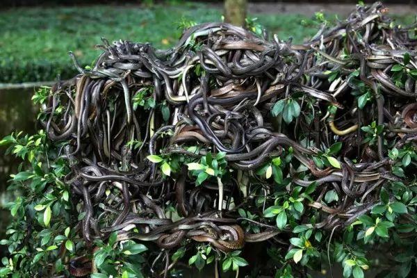 صور - ماذا تعرف عن جزيرة الثعابين الاكثر رعبا في العالم ؟