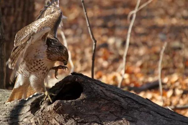 صور - 10 معلومات غريبة عن السنجاب