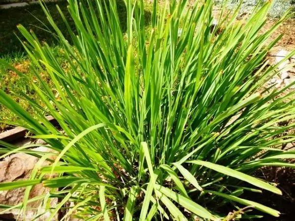 صور - ما هي انواع النباتات الطاردة للحشرات ؟