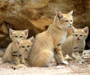 القطط من افضل انواع الحيوانت الاليفة التي يمكن تربيتها ، فالقطط تتميز بالخفة والنشاط وانها لعوبة ، وهناك الكثير من المعلومات عن القطط التي ستحب ...