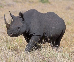 الانقراض ليس شيئا جديدا على كوكبنا، ولكن الحيوانات المنقرضة حديثا يموتون الآن بمعدل ينذر بالخطر وذلك بفضل البشر، ونحن الآن نفقد عشرات الانواع  يوميا، ...
