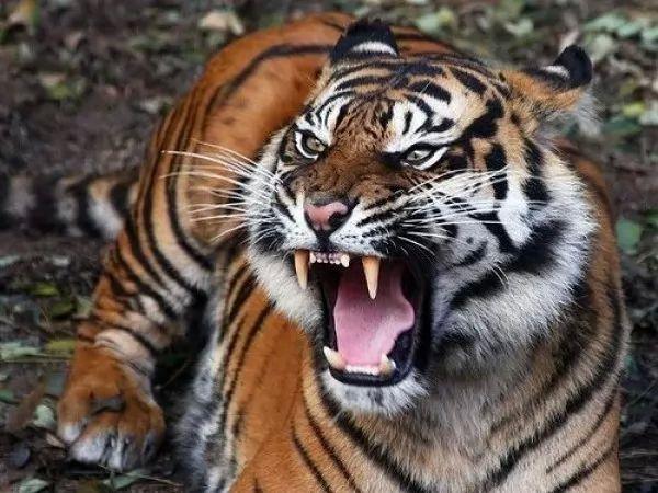 صور - قائمة باسماء الحيوانات المنقرضة حديثا بالصور
