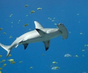 يتكون النظام البيئي لدينا من الحيوانات والنباتات المترابطة والتي تشكل شبكة معقدة من الحياة، حيث ان انقراض نوع واحد قد يؤثر على النظام البيولوجي كله ...