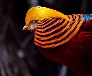 ما هي اجمل الطيور في العالم ، هناك بعض الانواع التي يظهر عليها بعض السمات التي تجعلها من اجمل الطيور في العالم ، وهنا قائمة 10 طيور من اجمل الطيور في ...