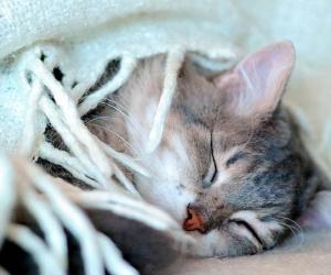 عندما تكون القطط مريضة جدا في هذه الحالة يجب عليك فهم اهم علامات موت القطط التي تشير الى وفاة قريبة للقط الخاص بك ، وهذا قد يساعدك على اتخاذ قرار