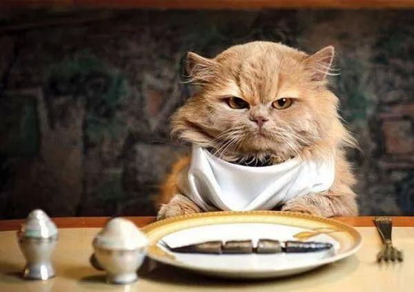 صور - لماذا القطط من الحيوانات الصعب ارضاؤها في الاكل ؟