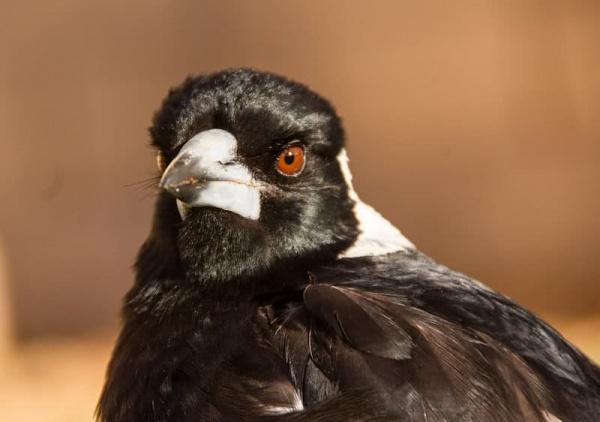 10 من اخطر الطيور فى العالم بالصور