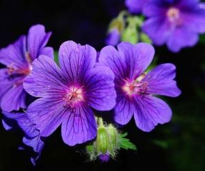 النباتات البرية البنفسجية هى نباتات جميلة تمتلك زهور باللون البنفسجى ومنها زهرة البنفسج ، ولها أوراق على شكل قلب ، بعض الأنواع من النباتات البرية ...