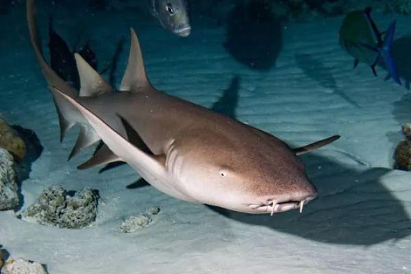 صور - 14 من اشهر انواع سمك القرش المفترس في العالم بالصور
