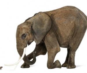 هل الفيل يخاف من الفأر ؟ واذا كان الامر بالايجاب ، فلماذا يخاف الفيل من الفأر ، ليس من الواضح من اين جاءت الفكرة، ولكن الكثير من الناس قد نظروا الى ...