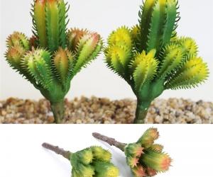 نبات الصبار يرتبط دائما بالصحراء، فهو  يزدهر فيكثير من المناطق الصحراوية حول العالم ،وكثير من نبات الصبار متواجد في الغابات المطيرة مثل برومليادس، ...