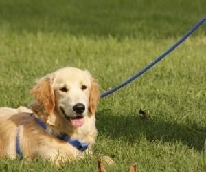 ما هو بالضبط تدريب الكلاب على الطاعة و لماذا تدريب الكلاب على الطاعة  مهم جدا للكلب و صاحبه ؟ و ما هي تدريبات الكلاب على الطاعة ؟ هذا ما ستعرفه في ...