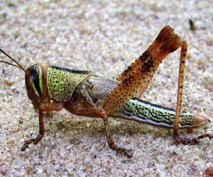 هل تعرف ان هناك حوالي 900 الف نوع من الحشرات المختلفة في جميع انحاء العالم، وسوف نتاول هنا عشرة من اخطر الحشرات على وجه الارض، ولا تخلط بين هذه ...