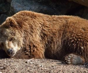 خلال أشهر الشتاء الباردة لا شيء يبدو أكثر جاذبية من سرير دافئ، ولكن بالنسبة لبعض الحيوانات يجب ان تدخل في مرحلة السبات، والسبات عند الحيوانات هو ...
