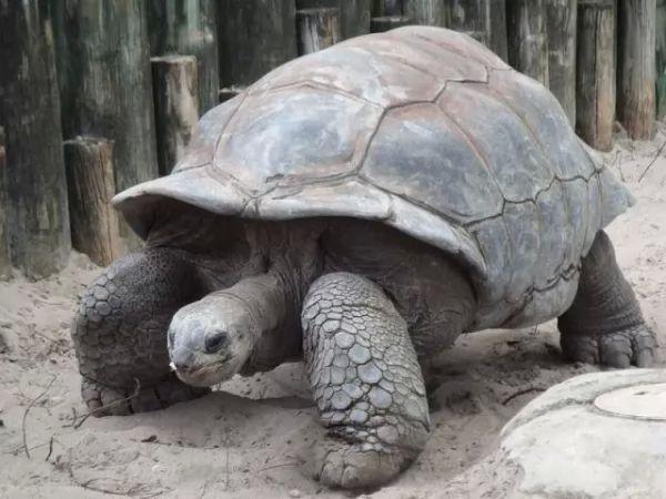 انواع طعام السلاحف الكبيرة