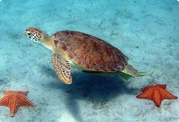 انواع طعام السلاحف المياه العذبة