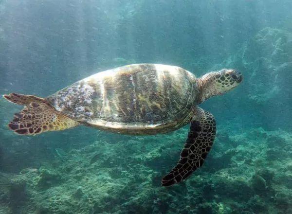 انواع طعام السلاحف البحرية