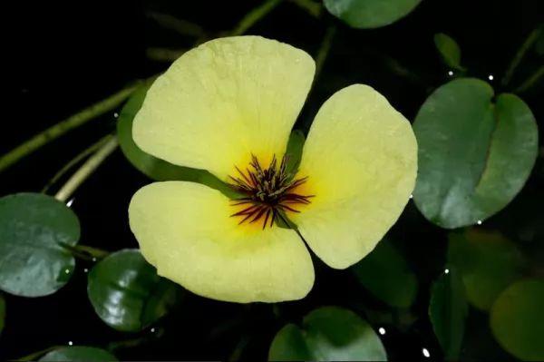 7 من اجمل الزهور المائية في العالم بالصور