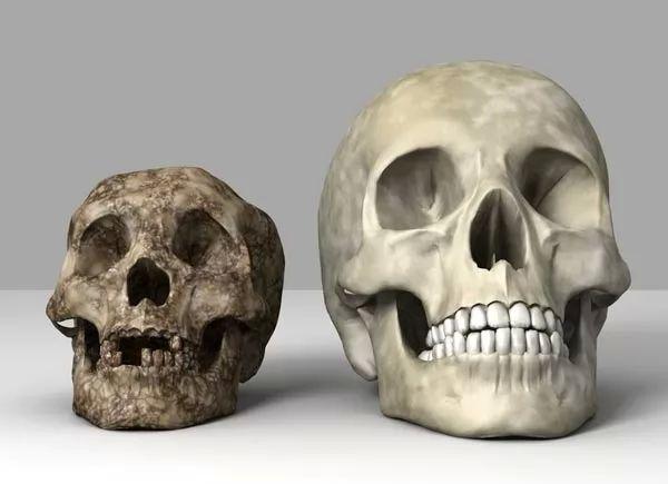 الفرق بين جمجمة البشر وجمجة الهوبيت