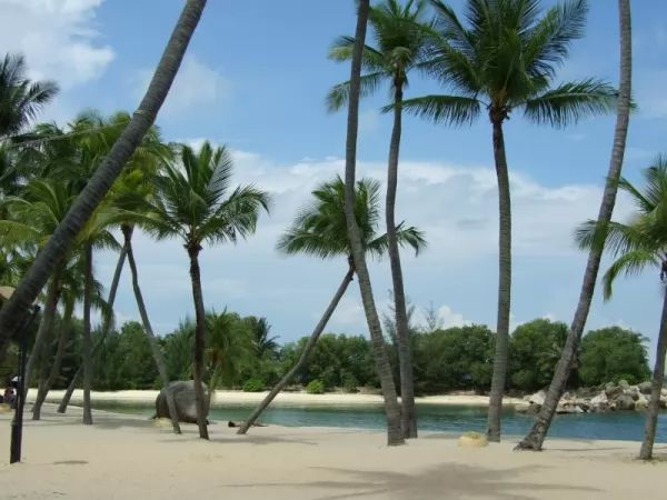 المناخ في جزر الكناري شبه استوائي
