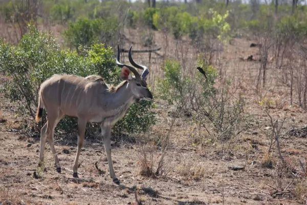 الكود الأكبر من الحيوانات الغريبة في افريقيا