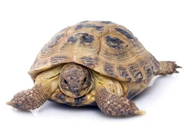 ملف شامل.. tortoises-as-pets-ti