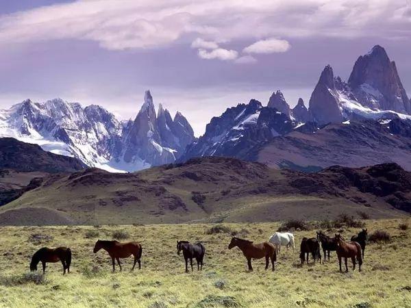 الحيوانات في جبال الانديز