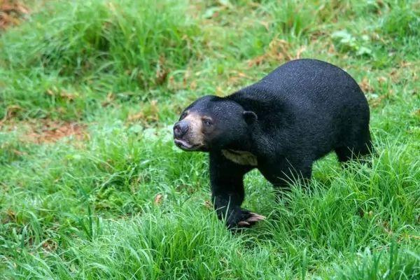 جميع انواع حيوان الدب تتشابه تشريحيا
