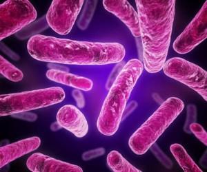 كيف ومتى تم اكتشاف البكتيريا ؟