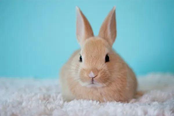 صغار الأرانب من الطف صغار الحيوانات