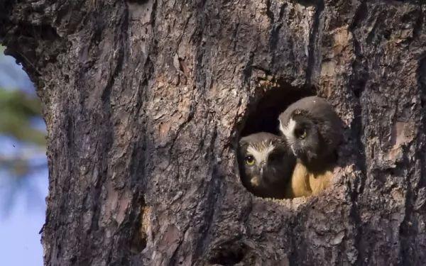 7 من اشهر انواع اعشاش الطيور بالصور bird-nests-types_101