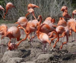 معظم الطيور تبني نوعا من العش الخاص بها من أجل وضع بيضها ورعاية صغارها، وانواع اعشاش الطيور تعتمد على انواع الطيور، فقد تكون اعشاش الطيور كبيرة أو ...