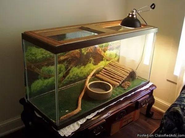 تربية الثعابين كحيوانات اليفة في المنزل