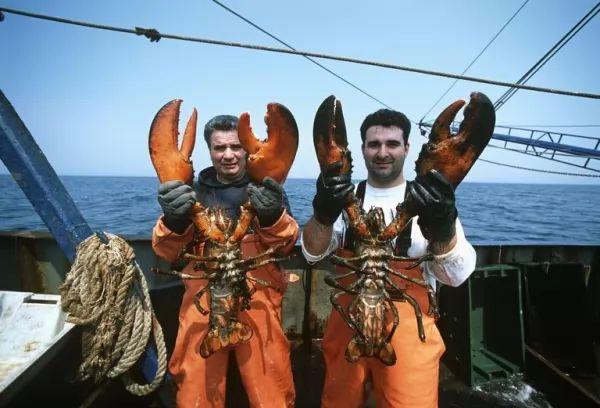هناك فرق واضح بين ذكور واناث سرطان البحر